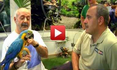 Video de Papagayos y Cía.