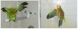 amazonas baño