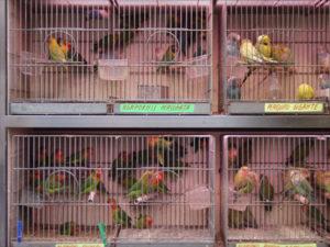 la-rambla-bird-vendor_half