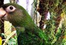 Loros y más loros…en Papagayos y Cía