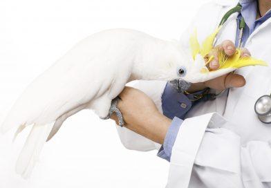 ¿Por qué el veterinario de exóticos es tan caro?