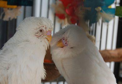 La muda en las aves