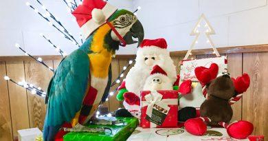Peligros navideños para nuestros loros