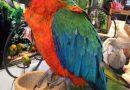 Explosión de color con nuestros guacamayos