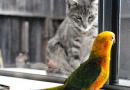 Convivencia gatos y psitácidos